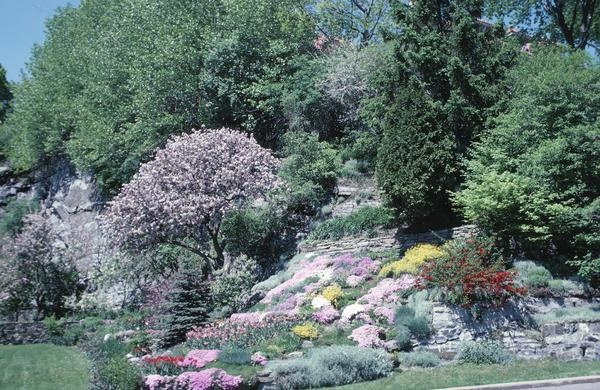 23 best images about hillside landscaping ideas on for No maintenance flowering shrubs