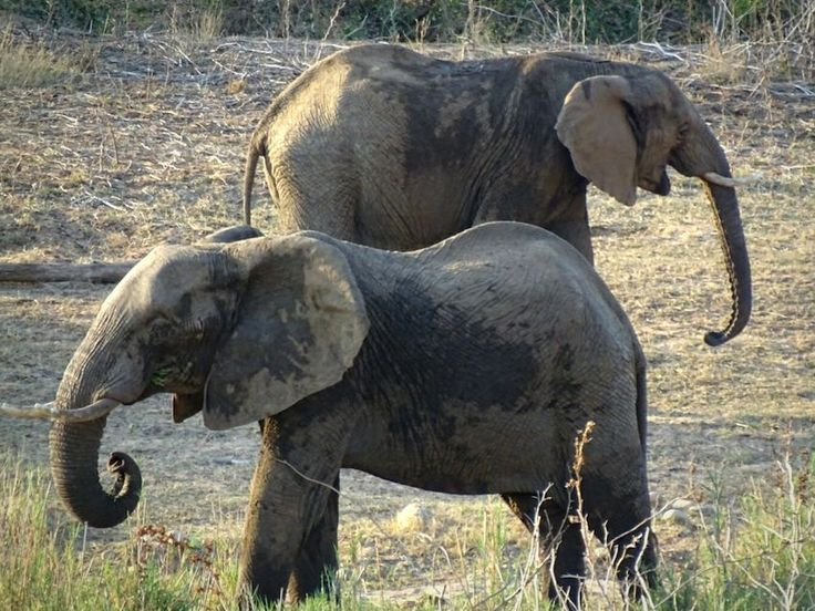 Elephants by Oliphant River Elephant South Africa