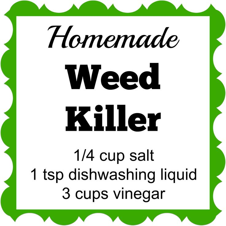 This Homemade Weed Killer has only 3 ingredients. Spray it on the weeds and they'll die within a few days.