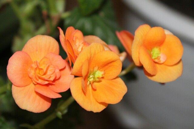 Прекрасные и яркие цветы)