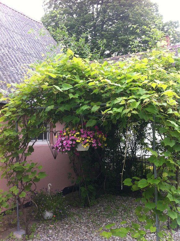 Midsummer at Venusgarden