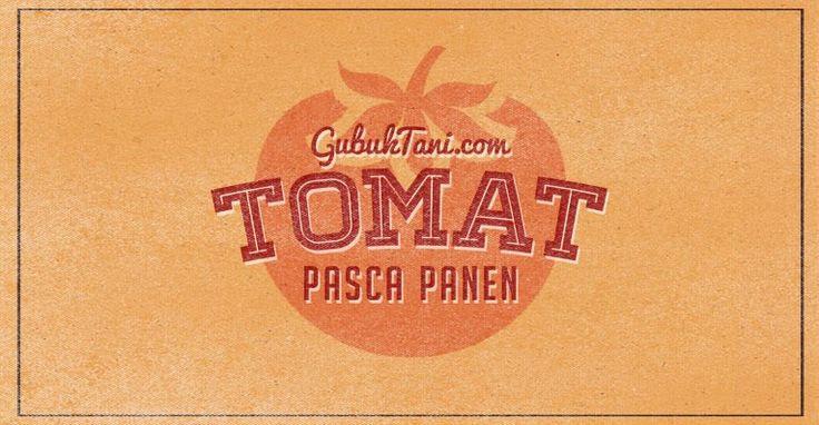 Tomat Pasca Panen