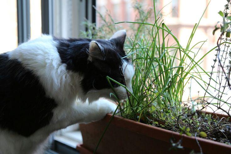 Herb garden cat