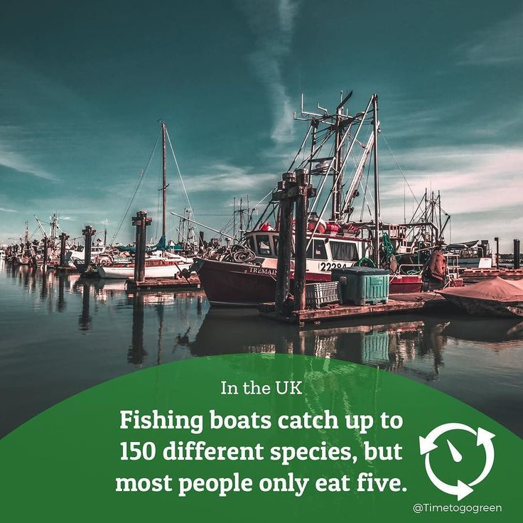The marine conservation society has a free app to help you identify where your fish comes from and to check that they're sustainable. . The app is called 'Good Fish Guide' on the app or play store! . Photo by Mado El Khouly . #fishing #fish #trawler #habour #savetheearth #foodie #saveourseas #bycatch #wastenot #wasteconscious #linkinbio #surplusfood #EcoFacts #GoingGreen #diet #ThinkGreen #seafood #livegreen #DYK #health #foodchain #shark #GoGreen #sustainableliving #oceanfish #overfishing…