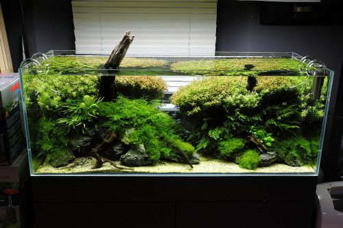 17 best images about aquascaping on pinterest aquarium decorations most beautiful and live plants - Design aquasacpe ...