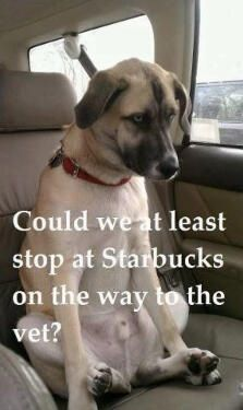 """""""Can we at least stop at Starbucks on the way to the vets"""""""