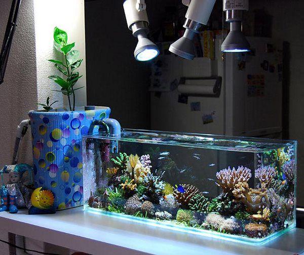 small saltwater aquarium reef aquascaping ideas #saltwater #aquarium