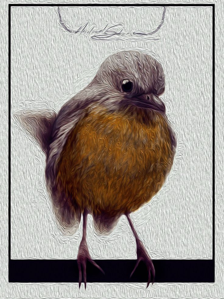 Robin the Bird on Behance