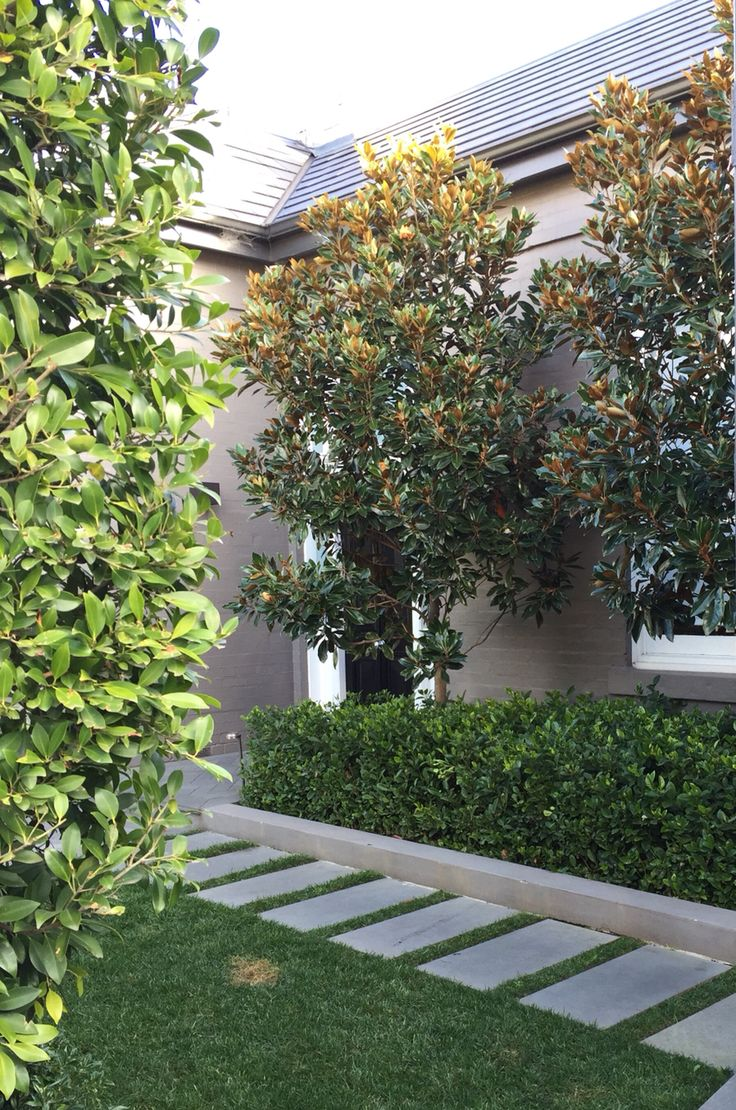 Little Gem Magnolia Trees, Gardenia + Ficus hedge | Classic contemporary landscape style