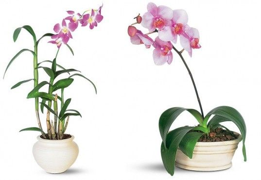 Best 25+ Air Purify Plants Ideas On Pinterest