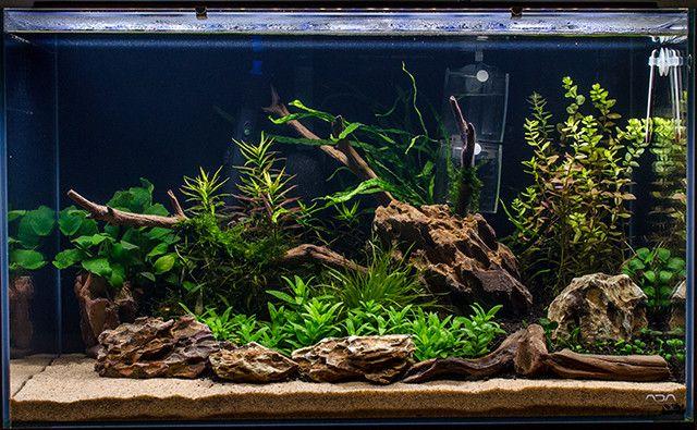 Spit1a S Low Tech 60p Page 2 Aquascape Aquarium Fresh Water Fish Tank Planted Aquarium