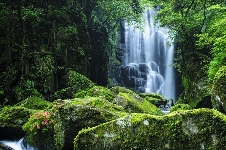 桑ノ木の滝(和歌山県新宮市)