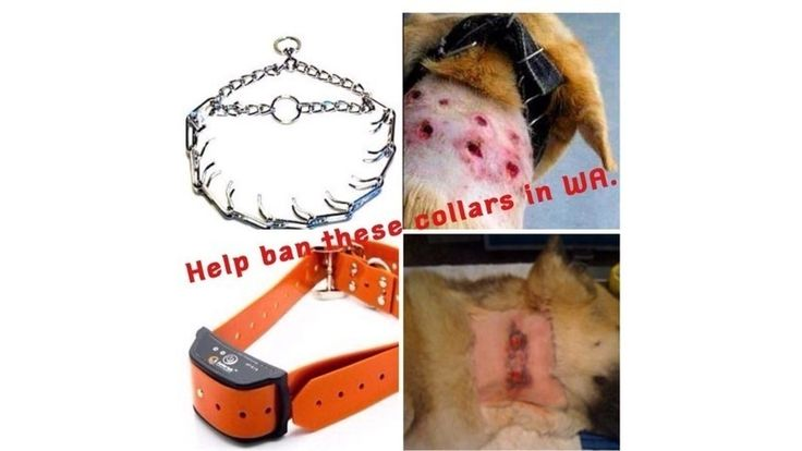 """""""Prong and shock"""" collars are often used as a training method by means of inflicting pain on an animal, predominantly a dog to modify its behaviour. The collars can cause serious physical injuries, especially when misused, such as puncture wounds, burns, (as photographed) sprained necks, oesophageal..."""