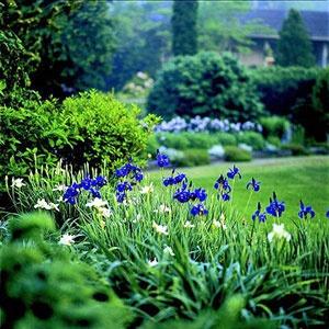 Landscape Gardens 415 best iris ideas for the garden images on pinterest   bearded