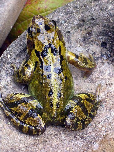 frog. Www.boneyardbakery.net