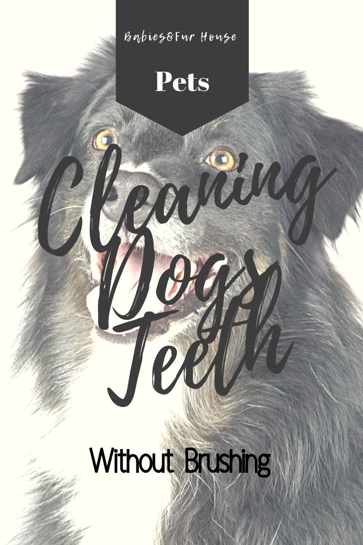 Cleaning dogs teeth without brushing dog teeth dog