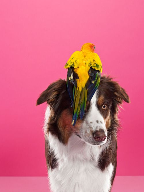Good Dog: Hats, Animal Friendship, Catherine Ledner, Animal Photography, Friendship Photographers, Birds Dogs, Pet, Beautiful Creatures, Time Magazines