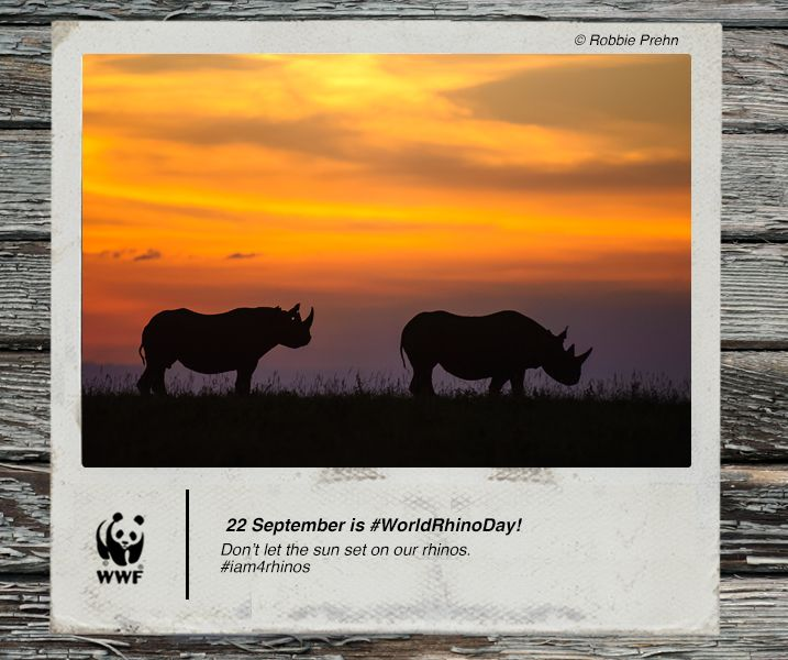 Don't let the sun set on our rhinos:Today is World Rhino Day! On this day we draw attention to the plight of our rhinos and the work we are doing with our partner countries in Africa and Asia to stop the poaching and trade of rhino horn. Share and like to help us speak up for rhinos. #iam4rhinos