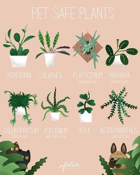Haustierfreundliche Pflanzen Plants Pet Friendly Plants House Plants Indoor