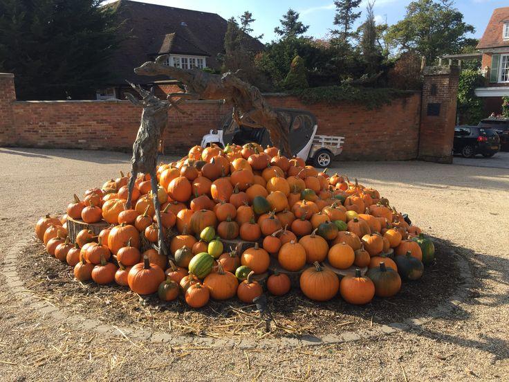 Halloween Pumpkin Display at Chewton Glen