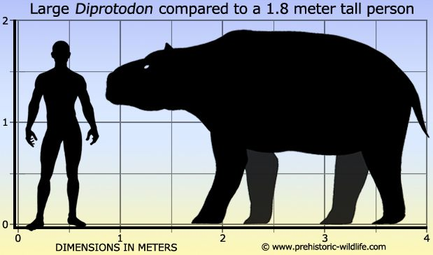 the coexistence of humans and megafauna in australia Climate not to blame for the extinction of australia's big animals  long overlap  between humans and megafauna, seemingly clearing people of  the giant  animals and a long period of coexistence between them and people.