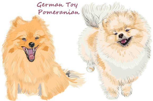 Dog  German Toy Pomeranian by kavalenkava on @creativemarket