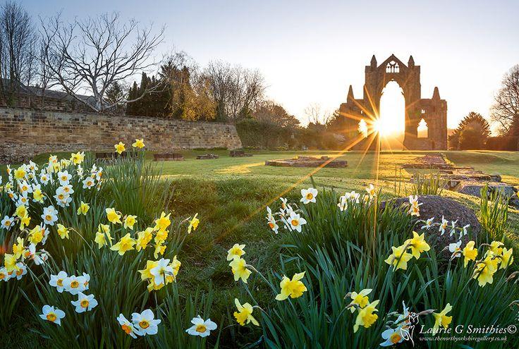 Daffodils At Guisborough Priory