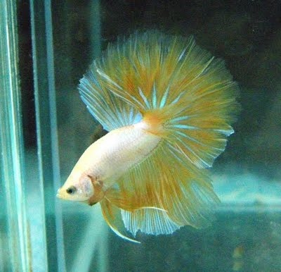 17 Best Images About Pretty Fish On Pinterest Colorful