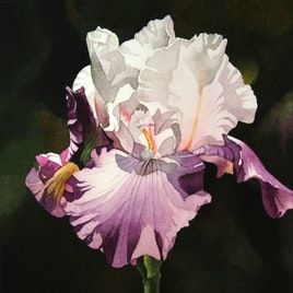 Painting watercolors with love. The paintings of Jacqueline Gnott