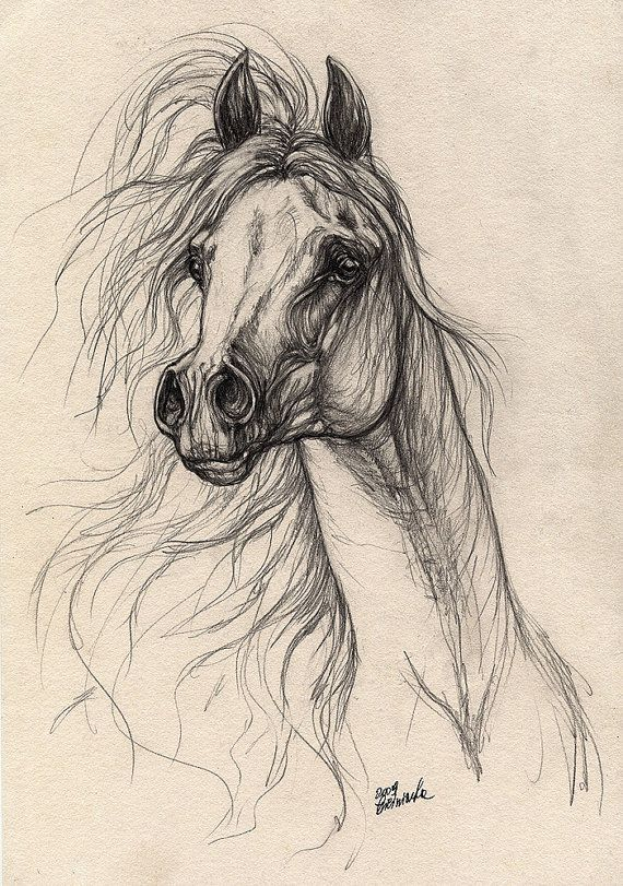 Grey arabian horse original pencil drawing by AngelHorses on Etsy, £45.00