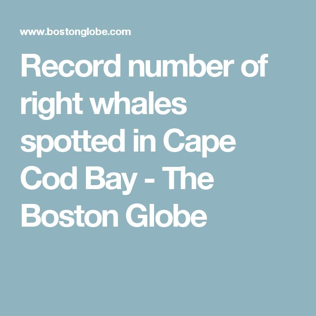 Record number of right whales spotted in Cape Cod Bay - The Boston Globe