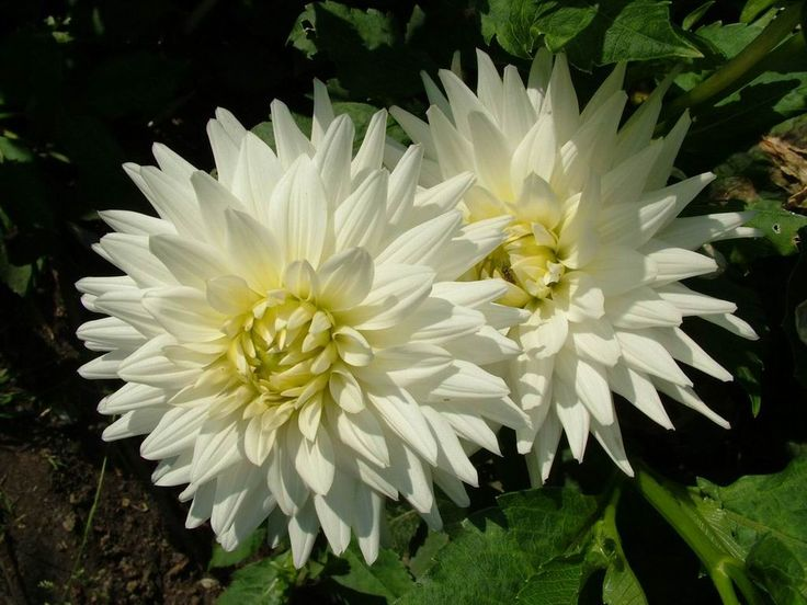 All Types Of White Flowers | pictures of two white flowers