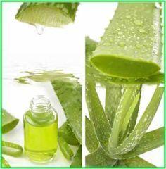 L'aloe vera, chiamata anche 'pianta del miracolo', è una pianta medicinale in grado di apportare ottimi benefici al nostro organismo: è un ottimo depuratore; elimina le tossine; ristruttura, rigenera e rivitalizza il midollo osseo; è antiossidante; tonifica i capillari sanguigni; ecc. Inoltre si dice possa essere di un aiuto in caso di asma, artrite, emorroidi, [...]