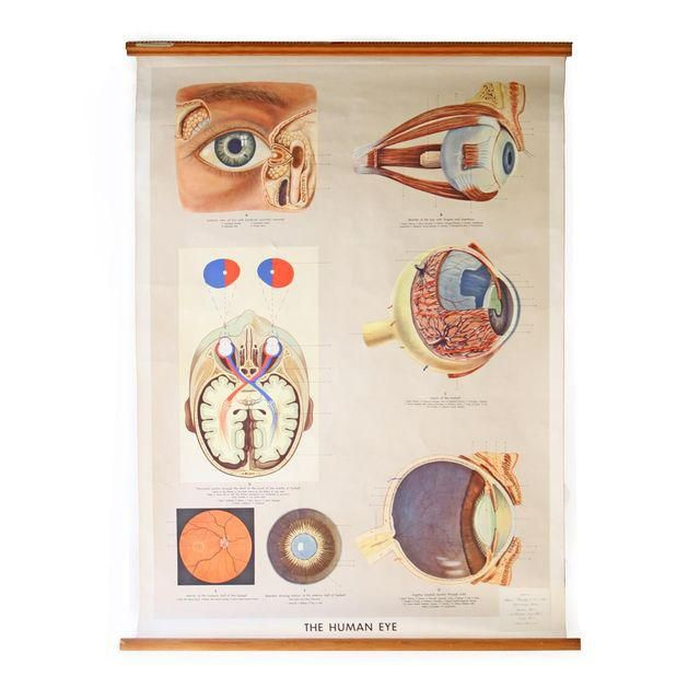 Image of Vintage English Human Eye Diagram