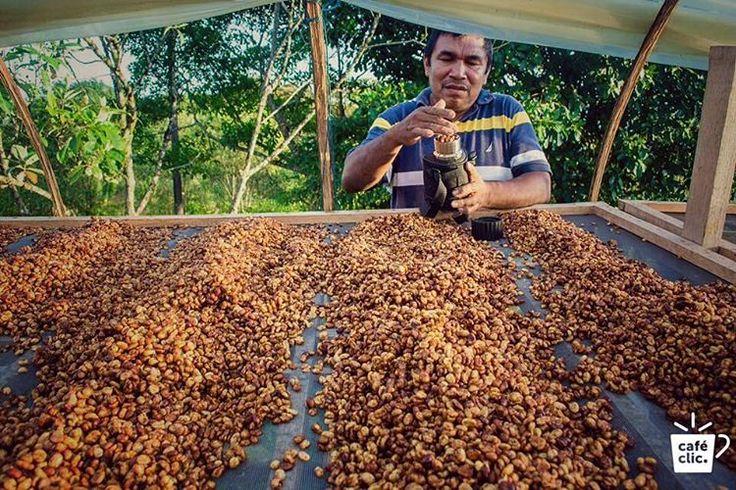Desde la Finca Bello Horizonte en Meta, Café Nakua podría ser llamado la taza perfecta. La síntesis ideal de microclima, agricultura limpia, sus acciones de responsabilidad social, y una buena calidad de grano, origina un café especial. Mucho tiempo, atención y experiencia es dedicada en el secado y la tostión para asegurarte que vas a recibir todos los sabores a la perfección. Sabores deliciosos a limón, nueces y panela…  Aprende más de Café Nakua en www.cafeclic.com