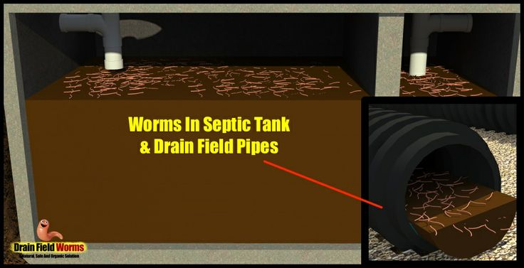 Drain Field Worms Drain Pinterest Septic tank, Worms
