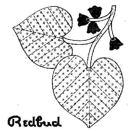 Redbud tree coloring pages ~ 17 Best images about leaf templates on Pinterest | Maple ...
