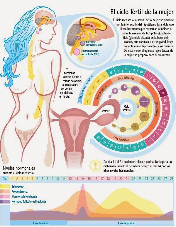 Aquí les dejo una infografía sobre la mujer y su ciclo.         Aclaración: La duración total de un ciclo varía de una mujer a otra. Existen...