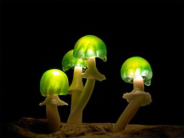 Led Mushroom par Yukio Takano