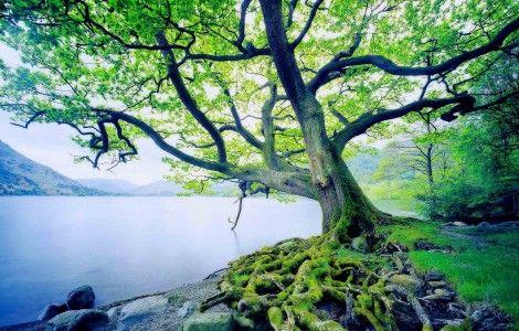 great nature wallpaper