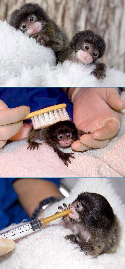 Adorable Baby Monkeys - SunnyLOL