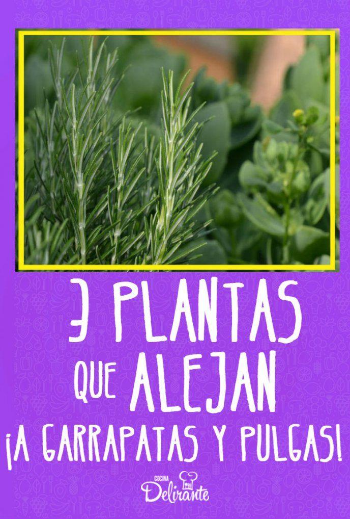 Como Acabar Con Las Pulgas En El Jardin 3 Plantas Que Alejan A Las Garrapatas Y Pulgas De Tu Casa En 2020