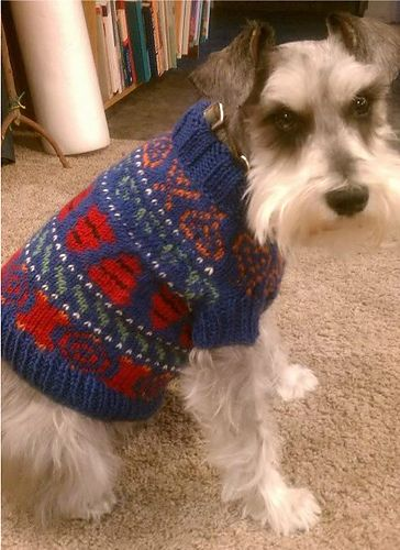 169 best Knit Dog Sweaters and Beds images on Pinterest | Dog ...