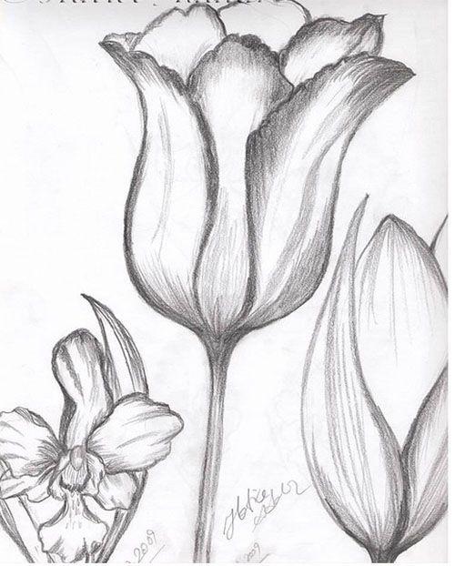 Lale çizim Ile Ilgili Görsel Sonucu Kaşık Elisi Pencil Drawings