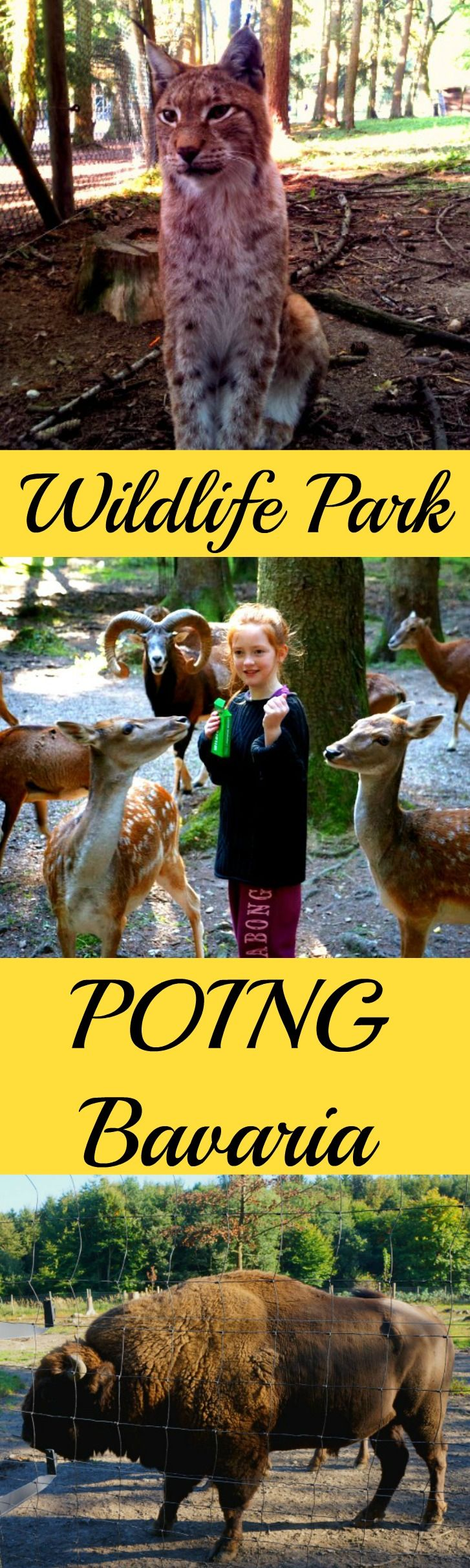 Wildlife Park Poing  is located just outside Munich. See the animals that used to live in the forests of Bavaria. Great family travel attraction
