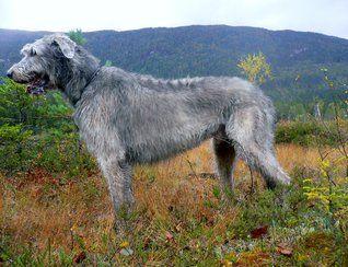 Mine hunder/ My dogs
