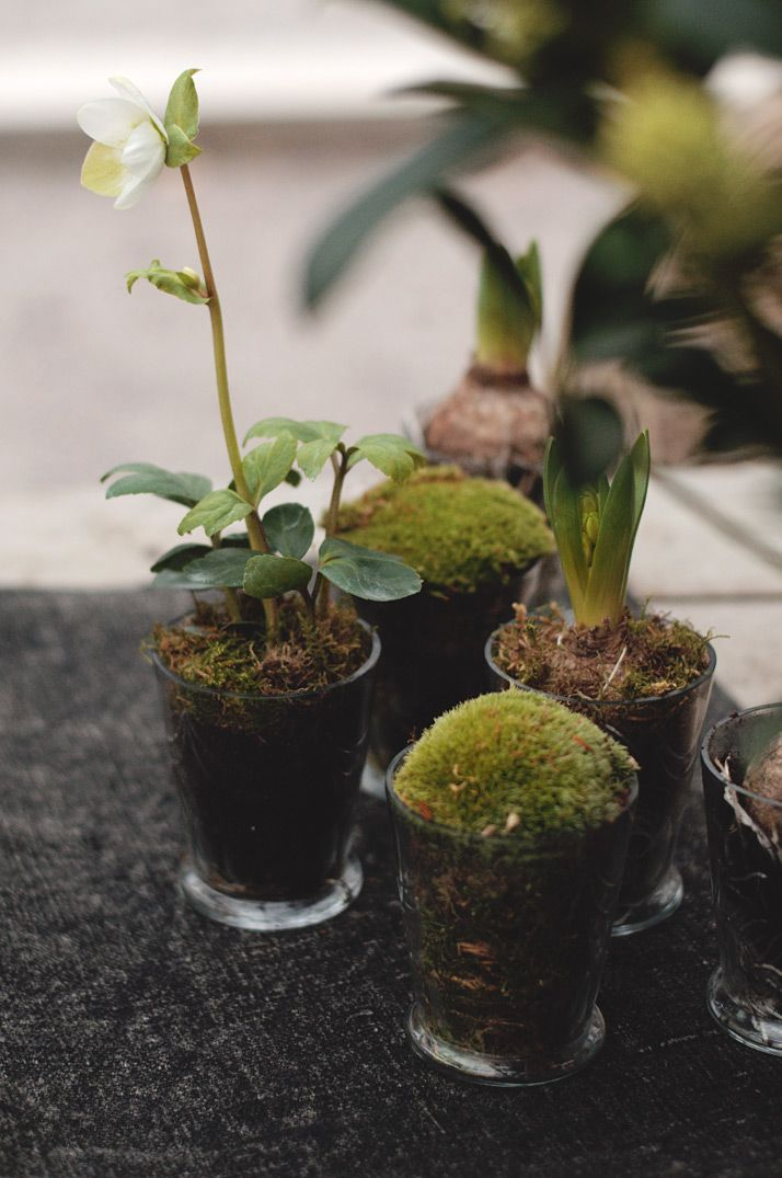 Succulents and mosses in clear shot glasses so you can see the soil layers and roots. An organic and earthy addition to your terrariums!