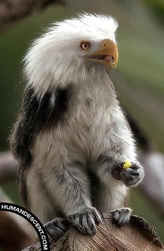 Eagle-lemur hybrid