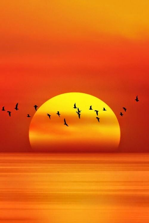Amazing sunset with birds