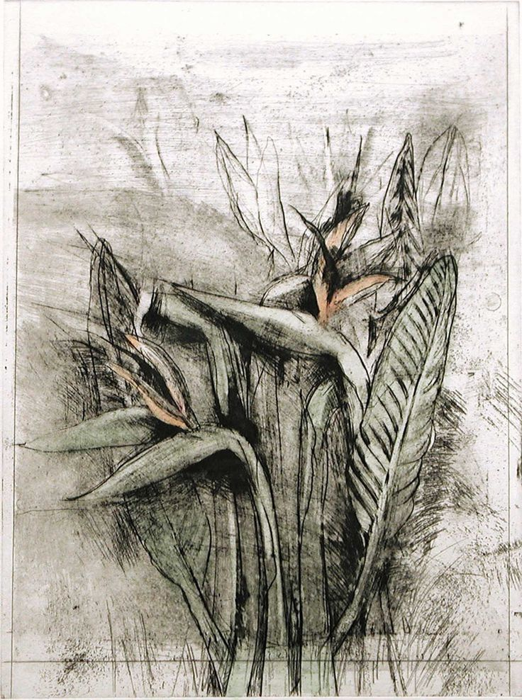Jim Dine - Strelitzia, from Temple of Flora, 1978, etching, drypoint, photogravure with watercolor